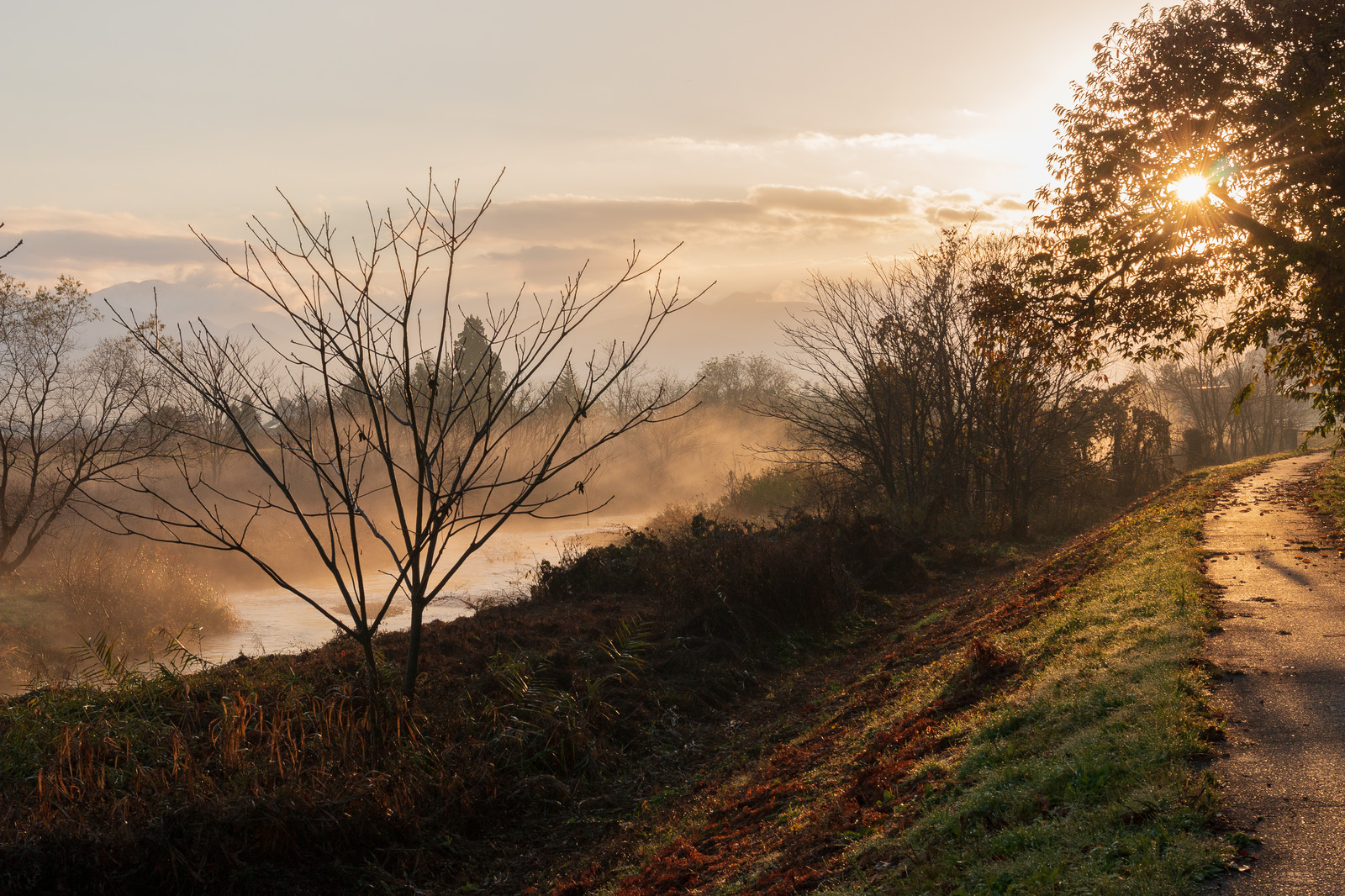 「朝焼けに染まる川霧(蒸気霧)」の写真