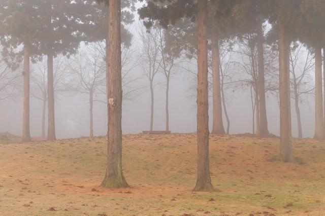 朝霧と木々の写真