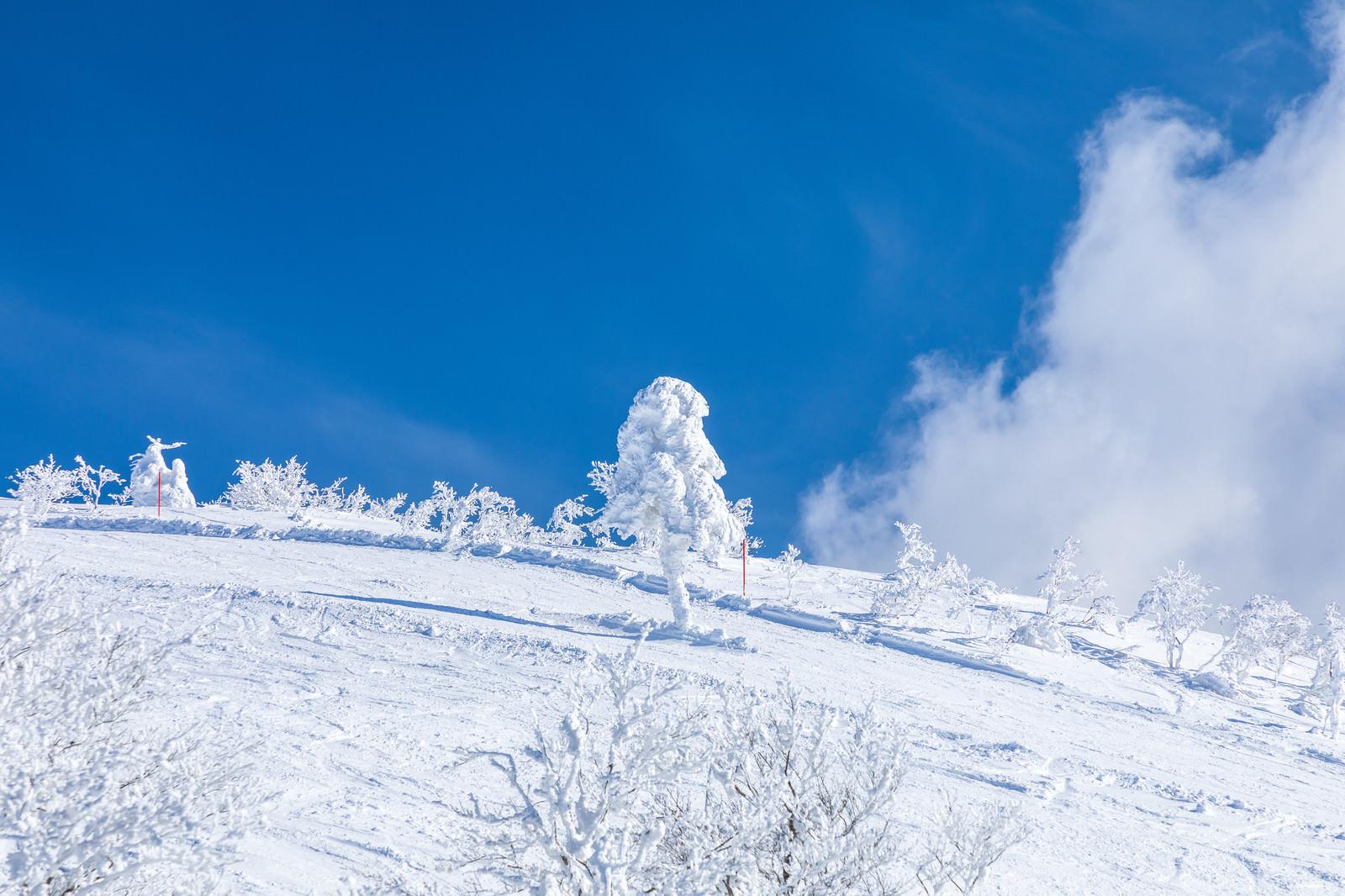 「晴れ渡る雪山と一本樹氷(森吉山)」の写真