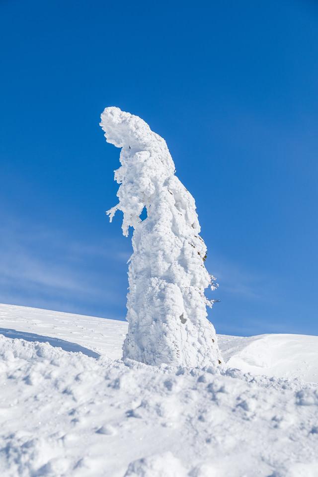 青空に伸びる一本樹氷(森吉山)の写真