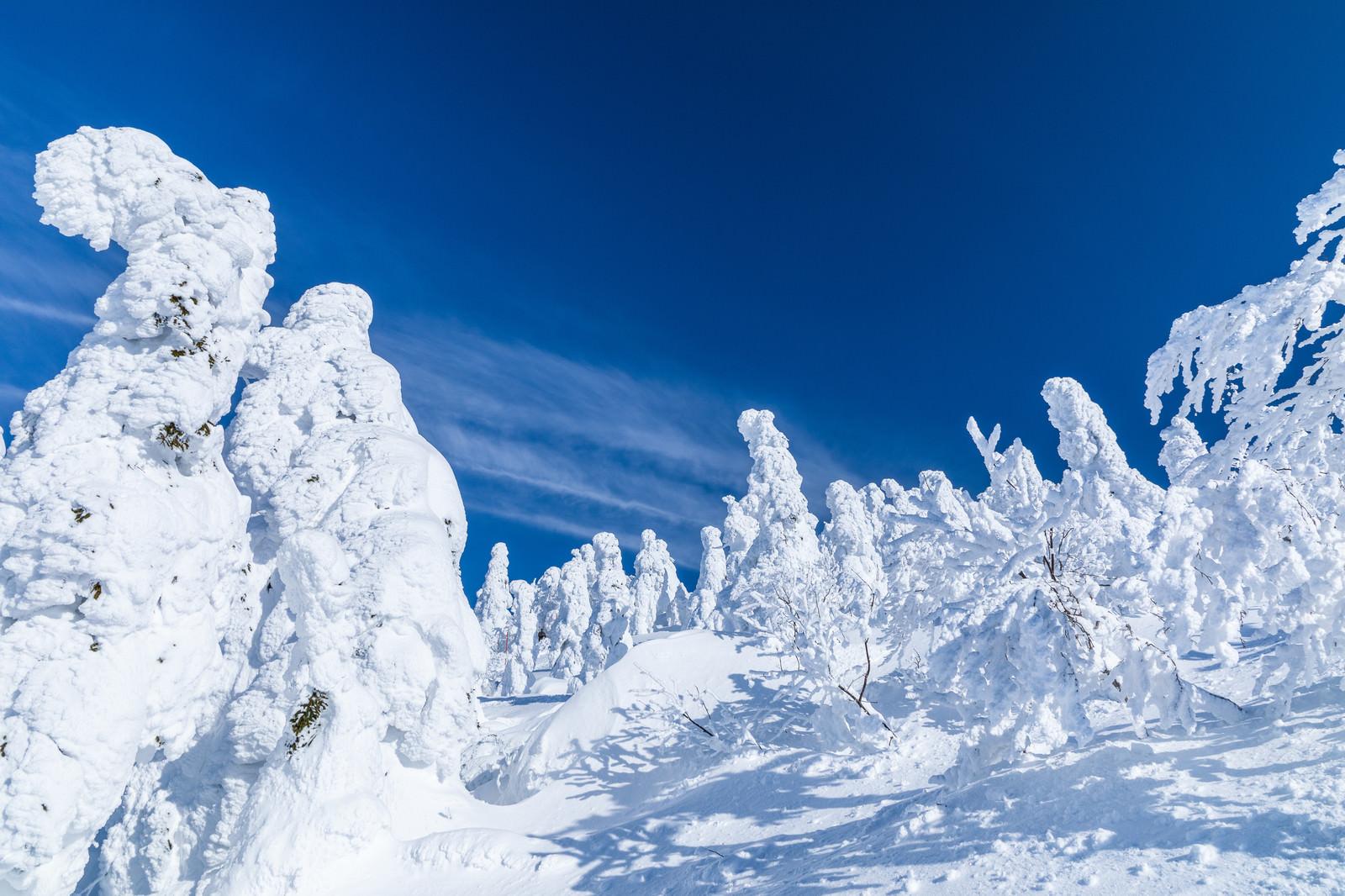 「樹氷に囲まれる(森吉山)」の写真