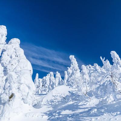 樹氷に囲まれる(森吉山)の写真