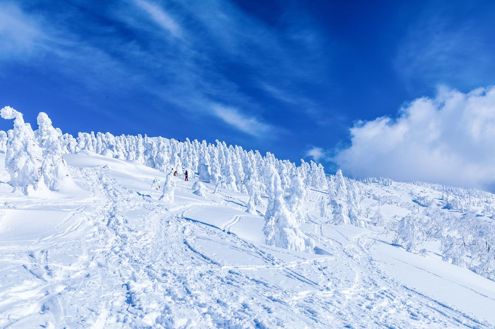 「樹氷へ続く足跡」の写真
