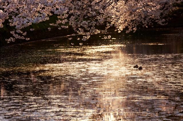 弘前公園内の堀の写真