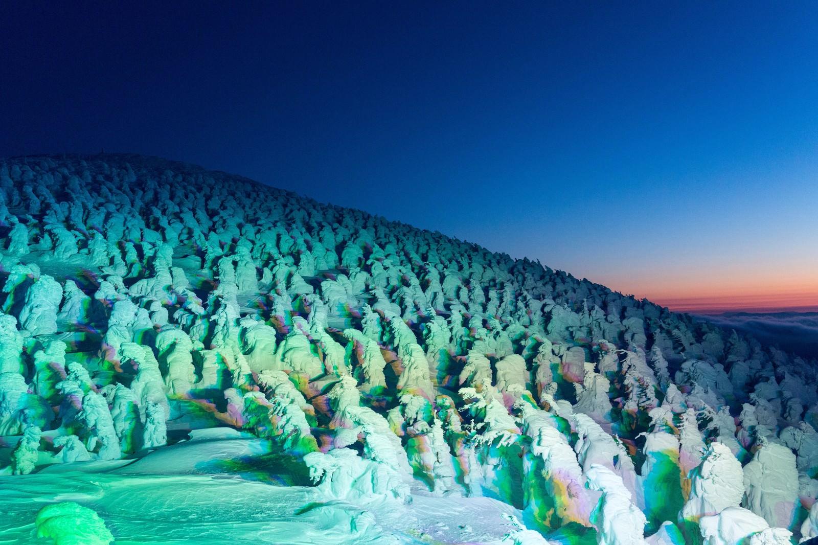 「蔵王の樹氷群蔵王の樹氷群」のフリー写真素材を拡大