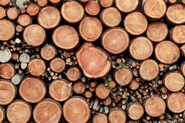 積み重なった薪の断面(テクスチャー)の写真