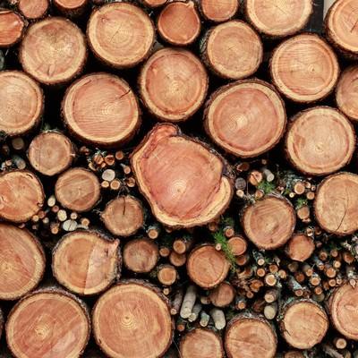 「積み重なった薪の断面(テクスチャー)」の写真素材