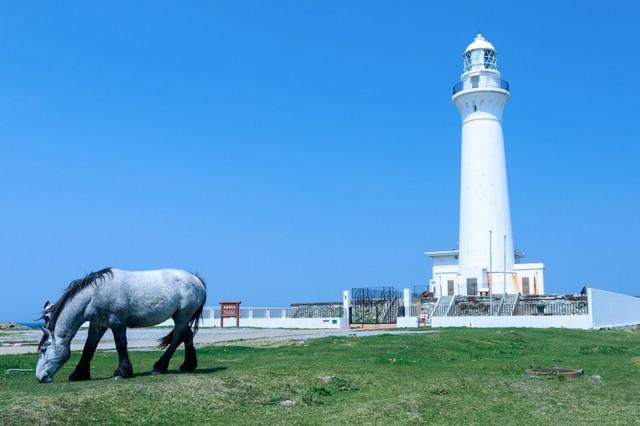 灯台と馬の写真