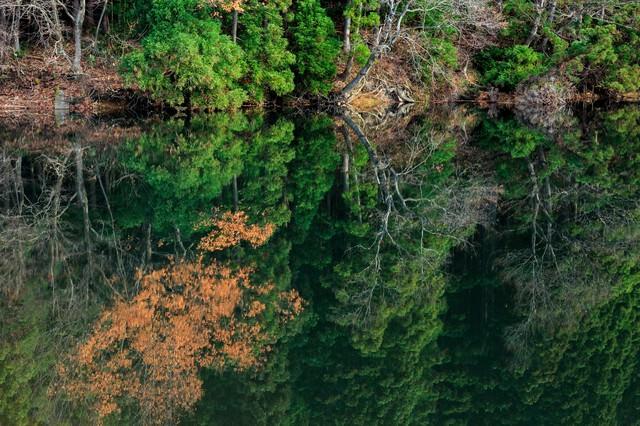 水面に映り込む木々(天地無用)の写真