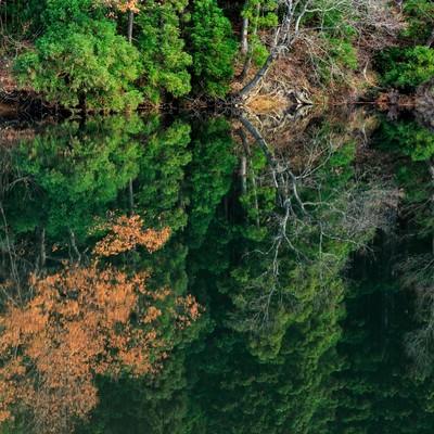 「水面に映り込む木々(天地無用)」の写真素材