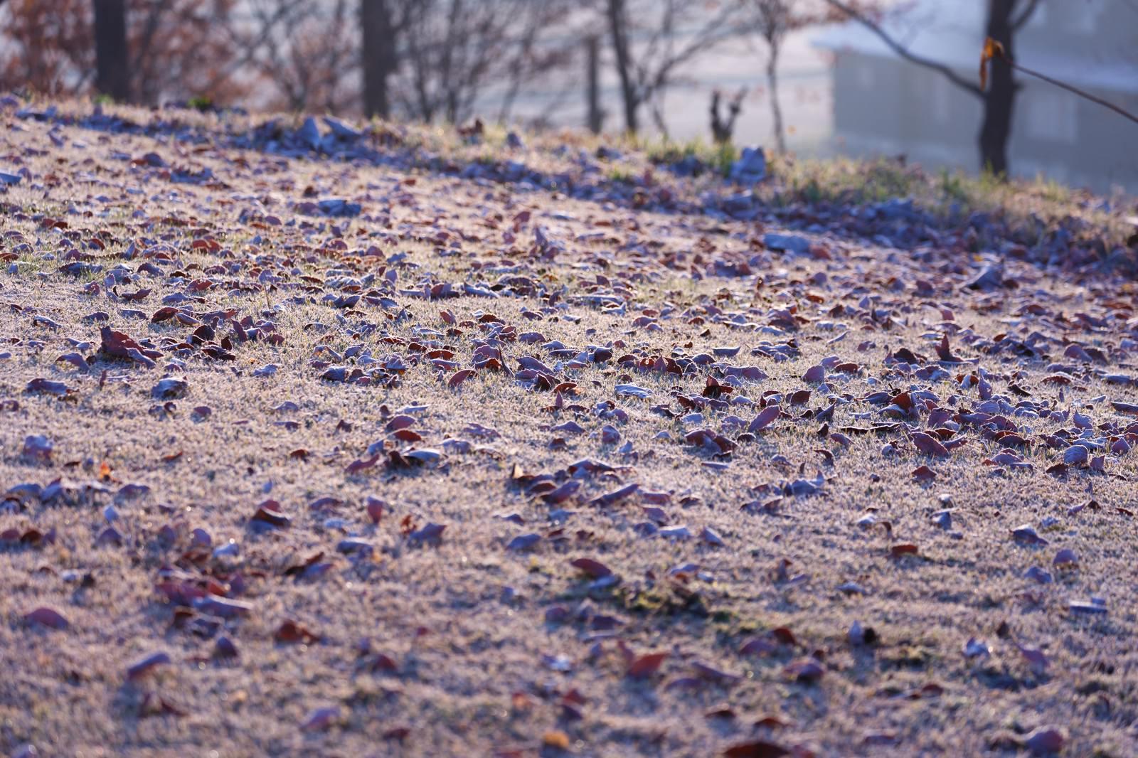 「落ち葉も凍る寒い朝」の写真