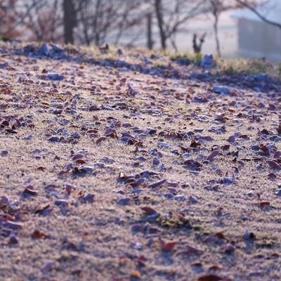 落ち葉も凍る寒い朝の写真