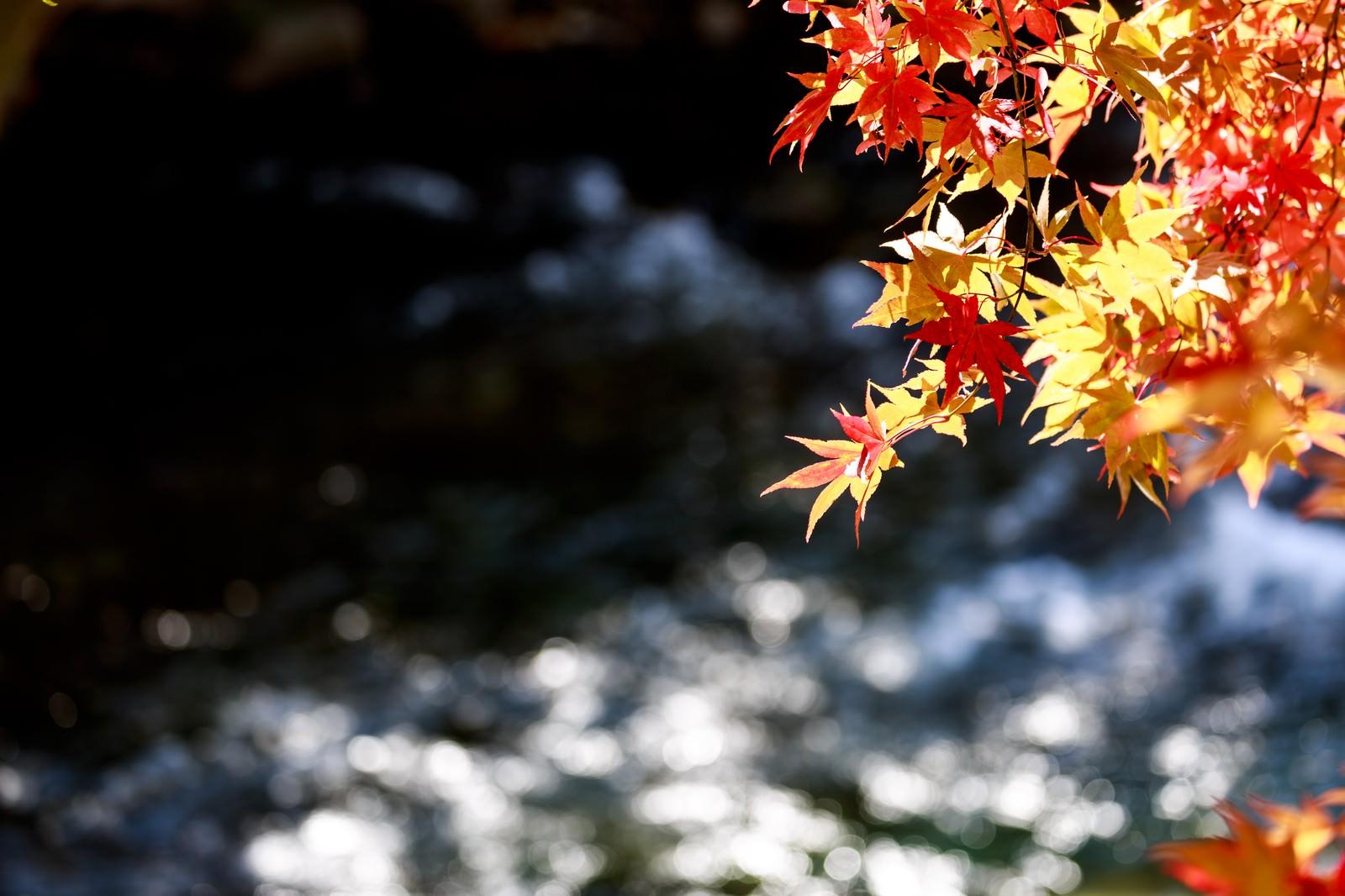 「定番の紅葉と河」の写真