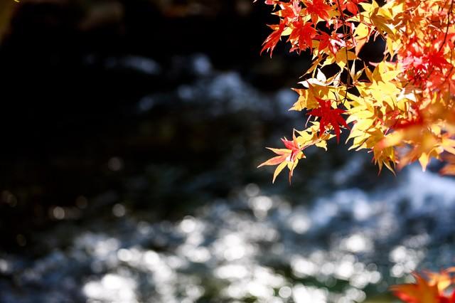 定番の紅葉と河の写真