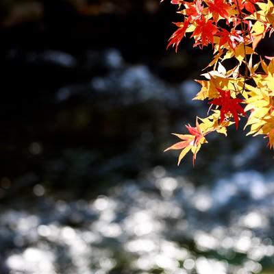 「定番の紅葉と河」の写真素材