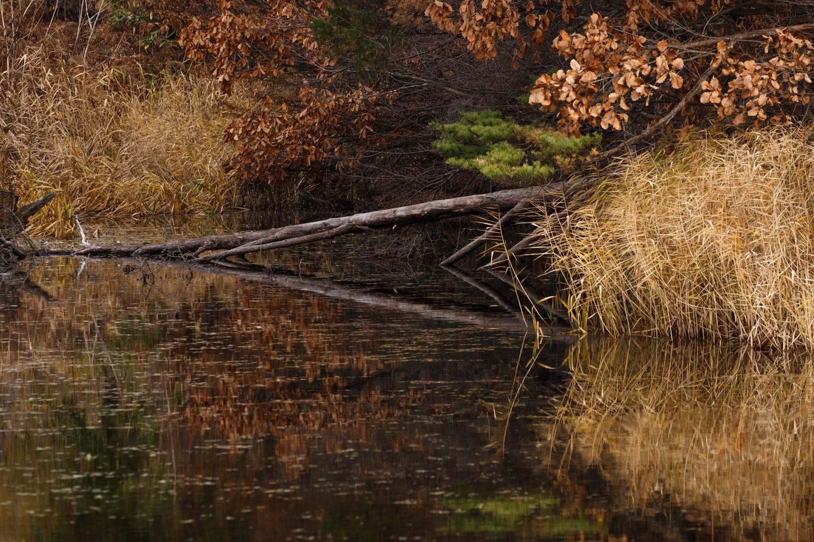 「倒木と沼」の写真
