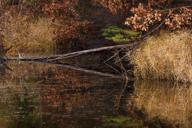 倒木と沼の写真