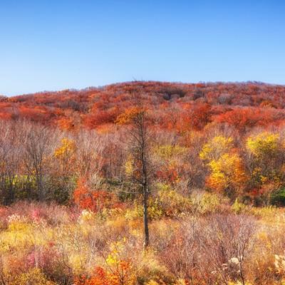 「枯れ木と紅葉」の写真素材