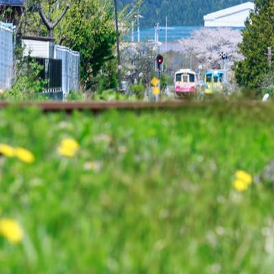 「春の訪れと由利高原鉄道」の写真素材