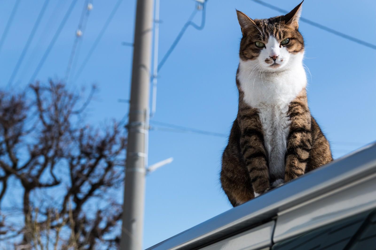 「屋根の上からにゃんこ」の写真