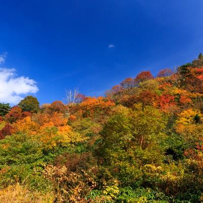 「栗駒山の紅葉」の写真素材