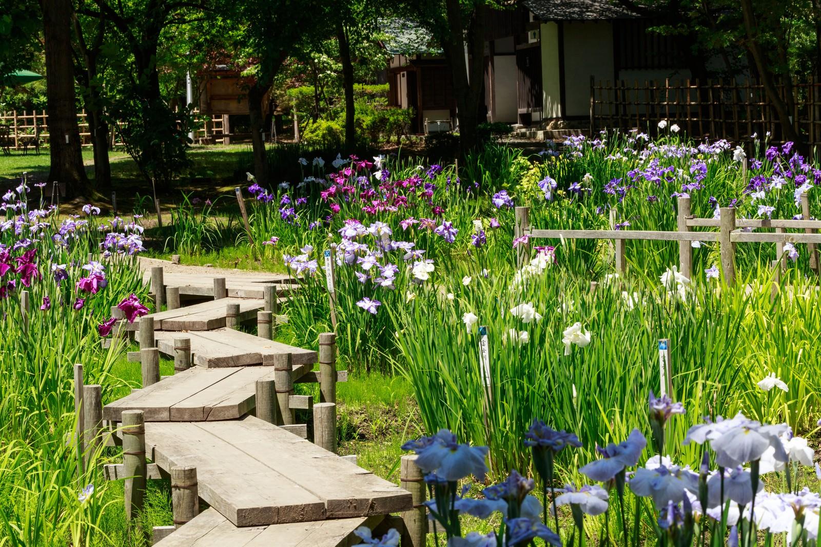 「菖蒲咲く池と板道」の写真