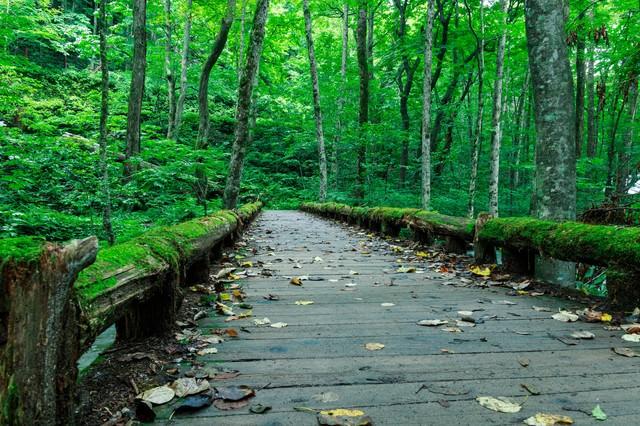 「奥入瀬の苔橋」のフリー写真素材