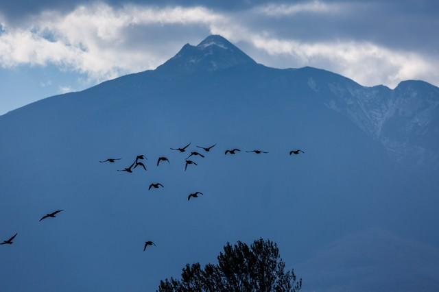 岩木山と飛び立つ鴨の写真