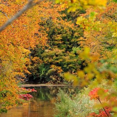 紅葉と沼の写真