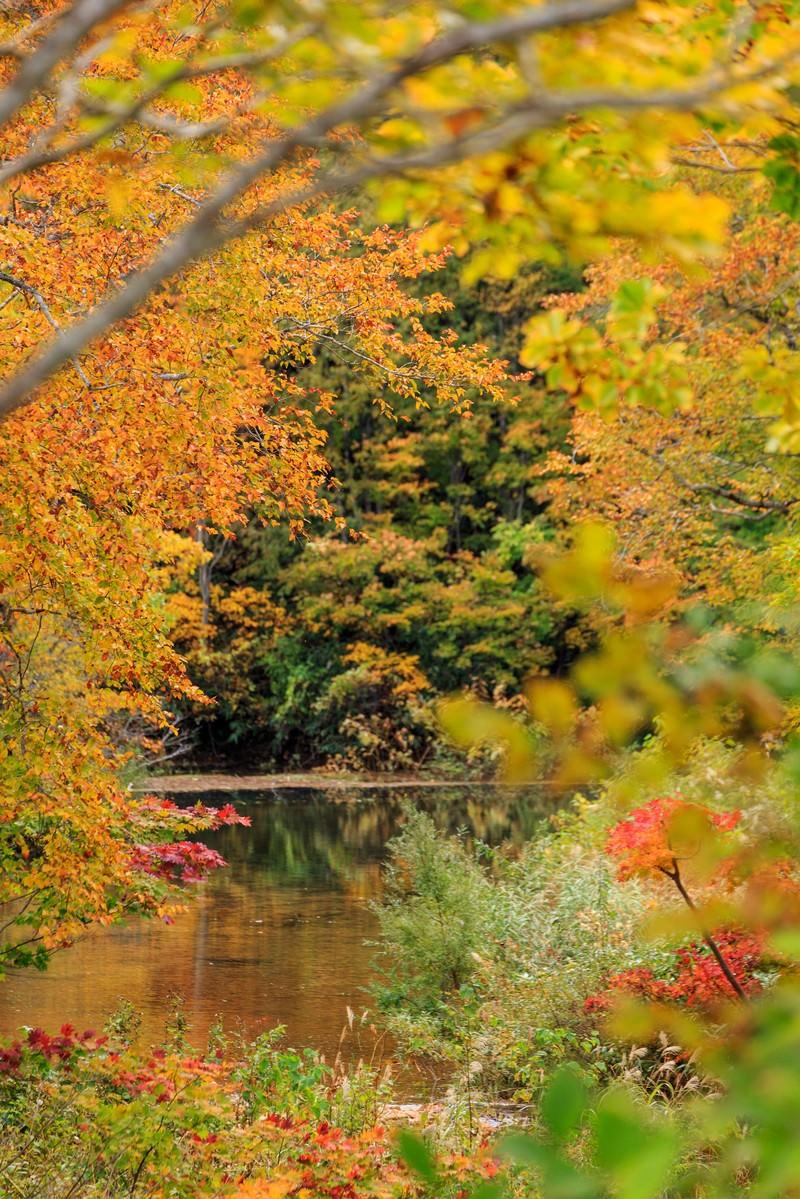「紅葉と沼紅葉と沼」のフリー写真素材を拡大