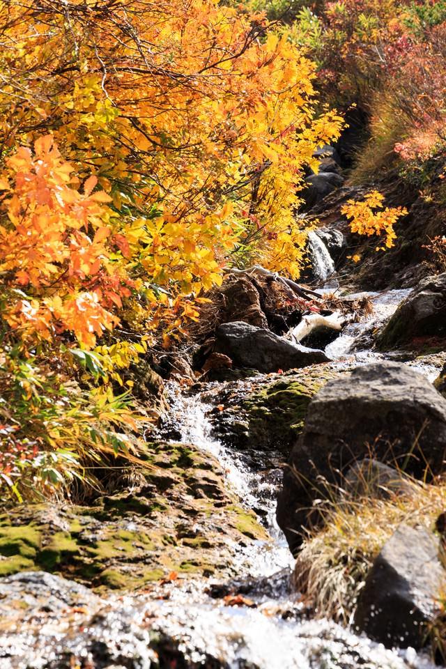 紅葉と小川の写真