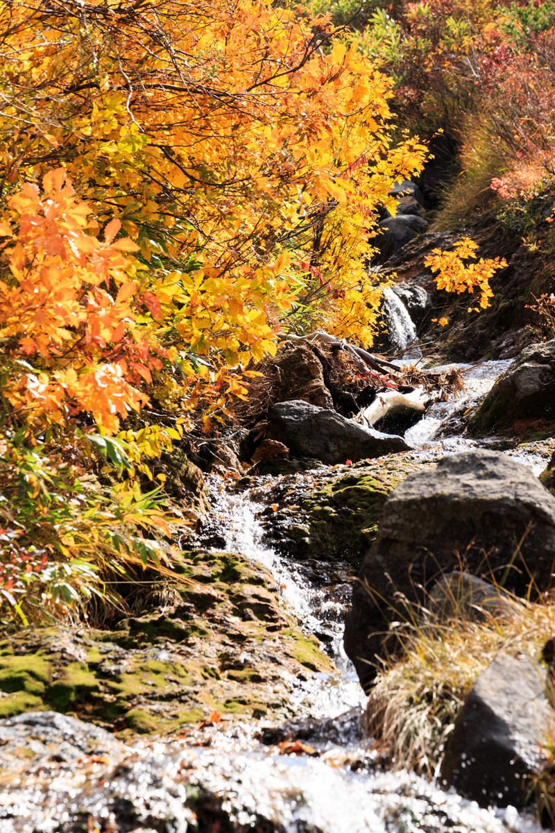 「紅葉と小川」の写真