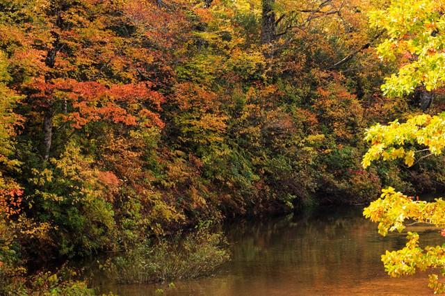 紅葉する木々と沼の写真