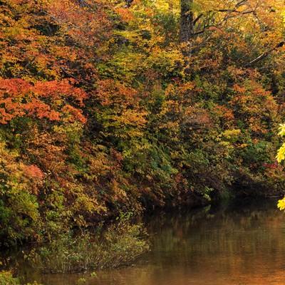 「紅葉する木々と沼」の写真素材