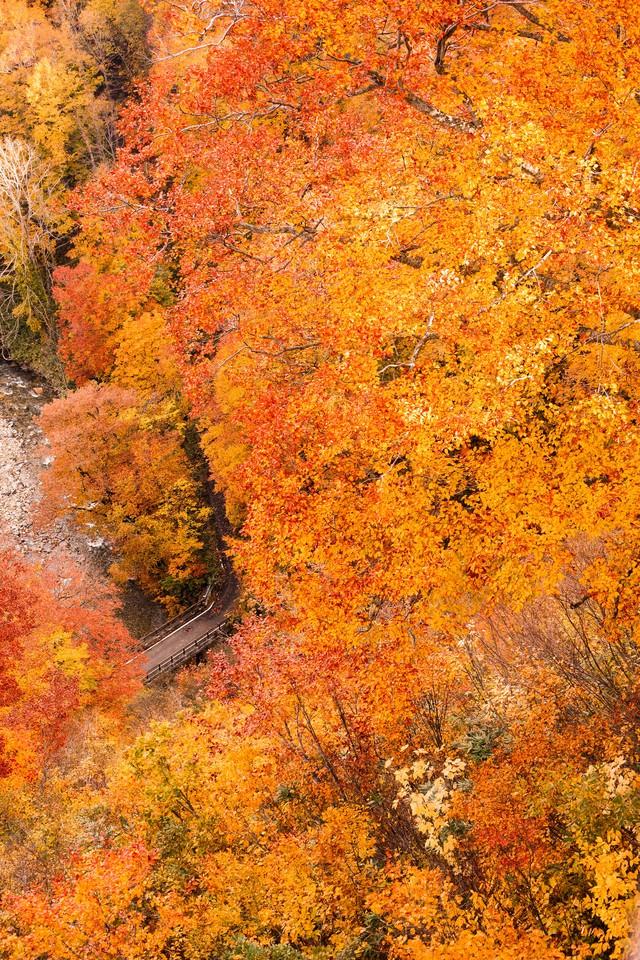 八甲田の紅葉の写真