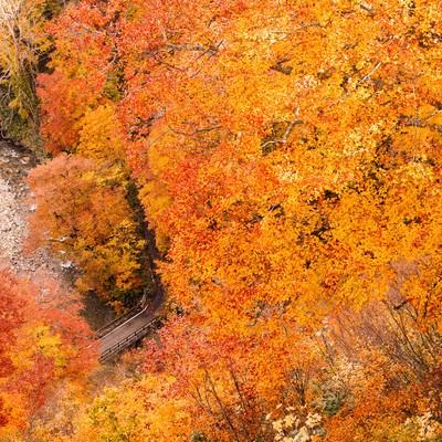 「八甲田の紅葉」の写真素材