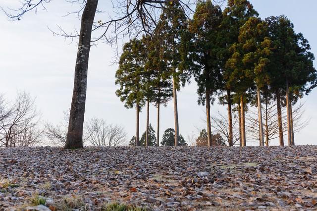 落ち葉と霜