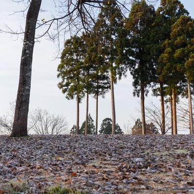 落ち葉と霜の写真