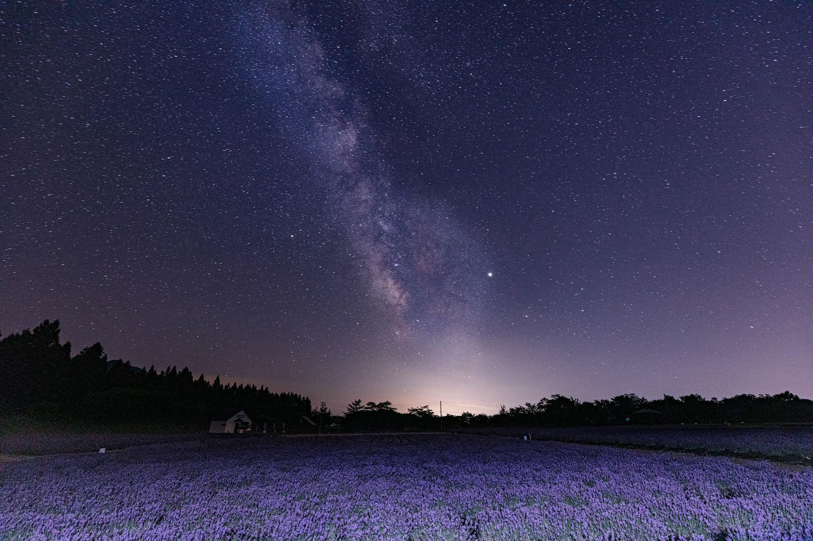 「ラベンダー畑と天の川」の写真