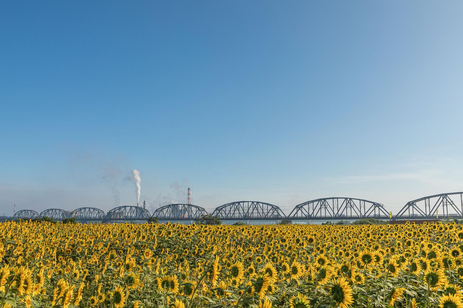 「向日葵畑から見る工場の煙」の写真