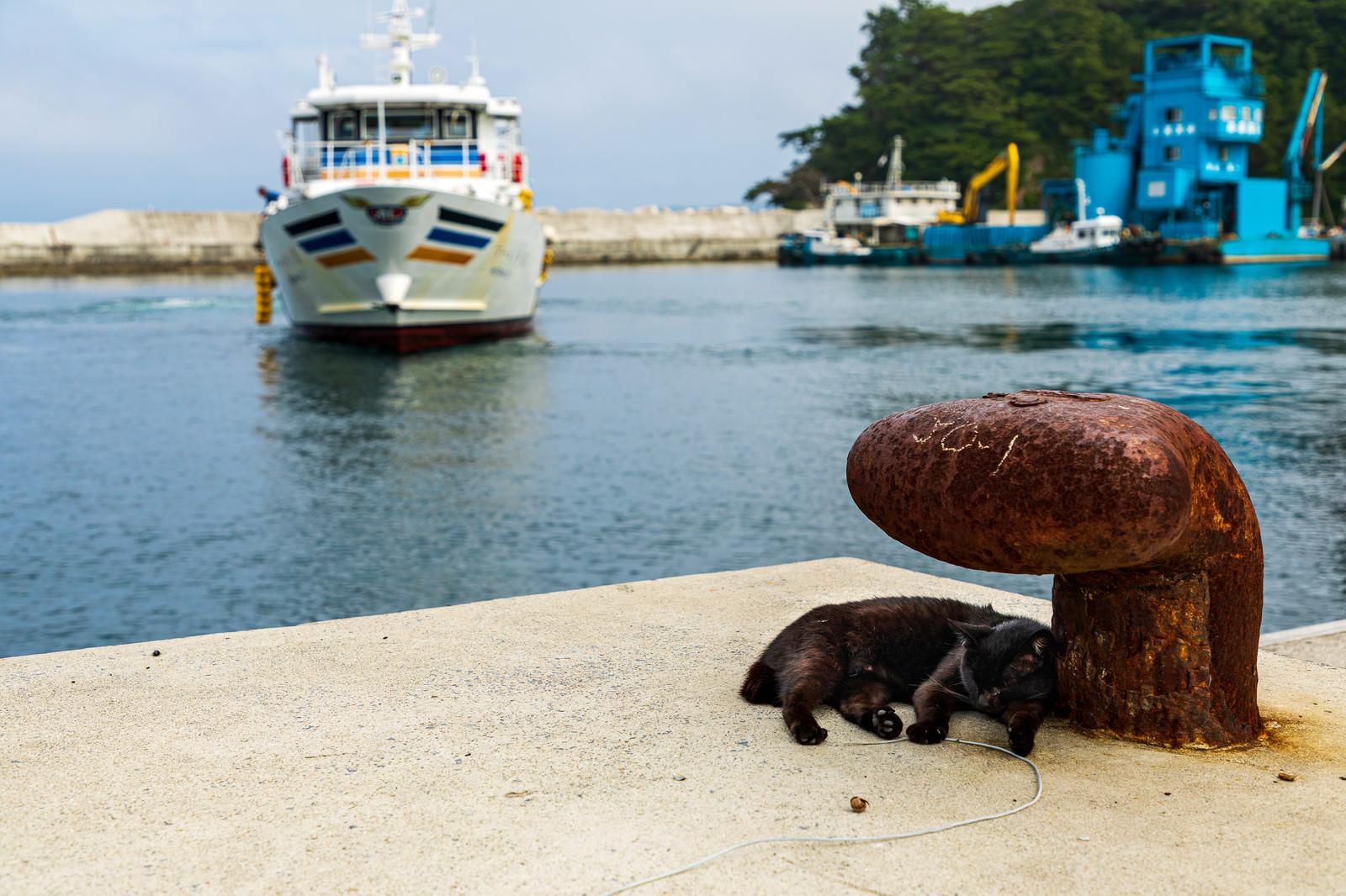 「錆びた係船柱と港でくつろぐ野良猫」の写真