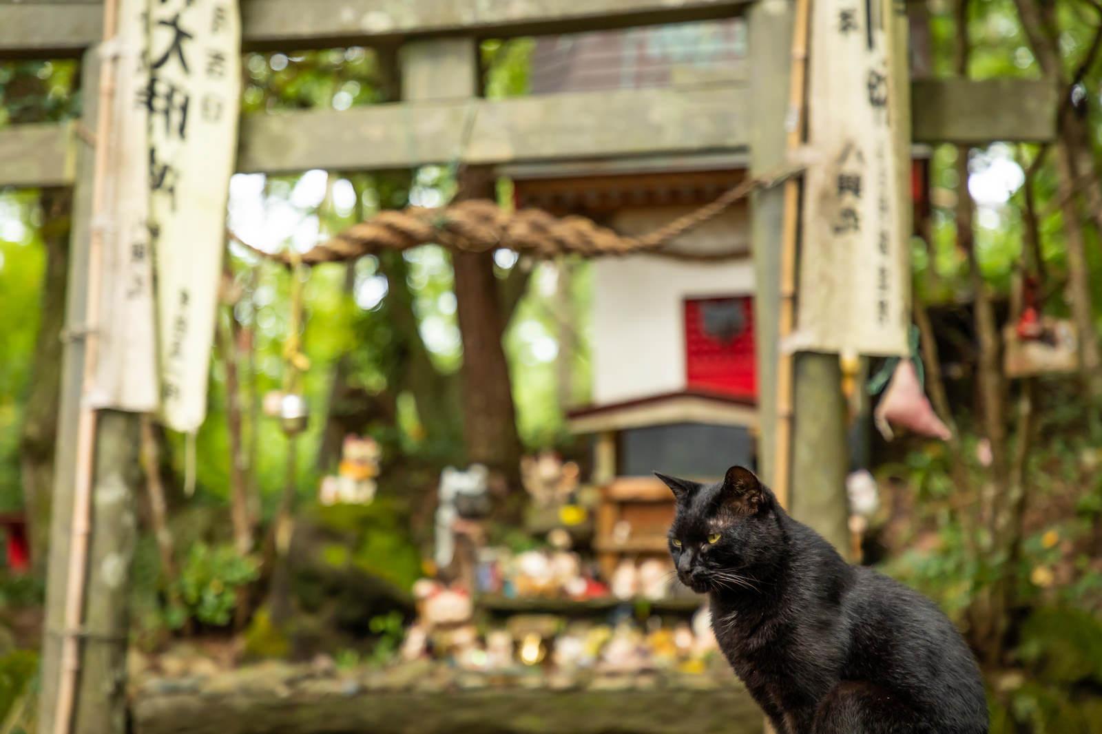 「田代島猫神社と黒猫」の写真