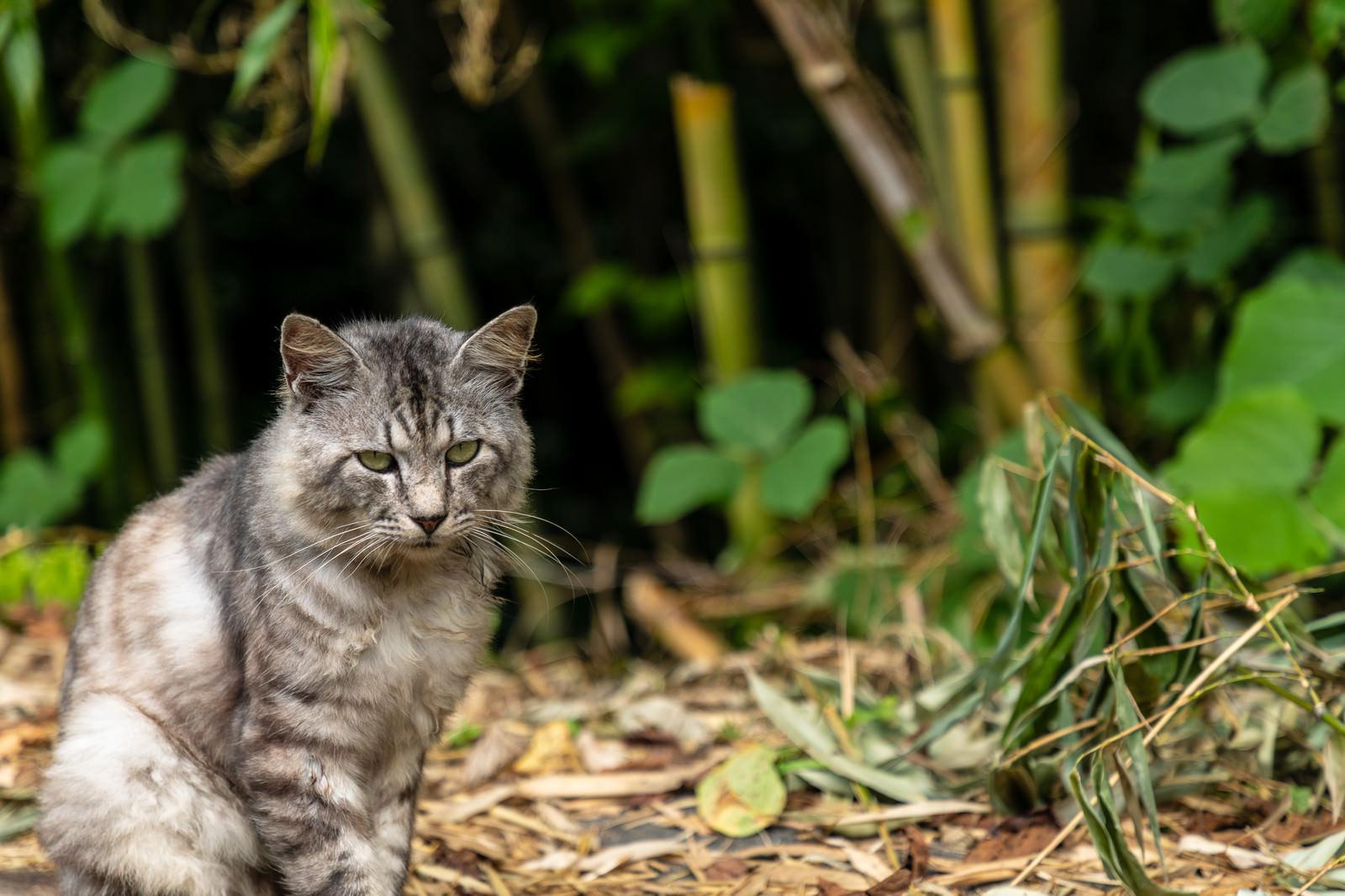 「竹藪にいる野良猫」の写真