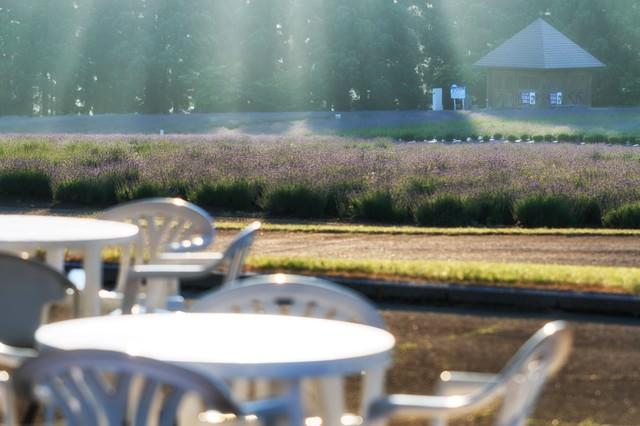 光が差し込むラベンダー畑とテーブルの写真