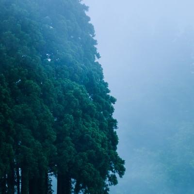 森の呼吸の写真
