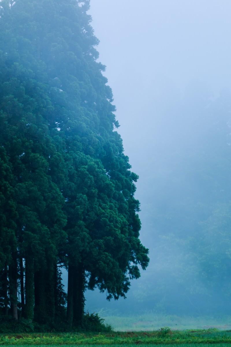 「森の呼吸」の写真