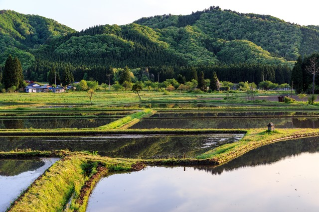 水を張った田んぼの写真