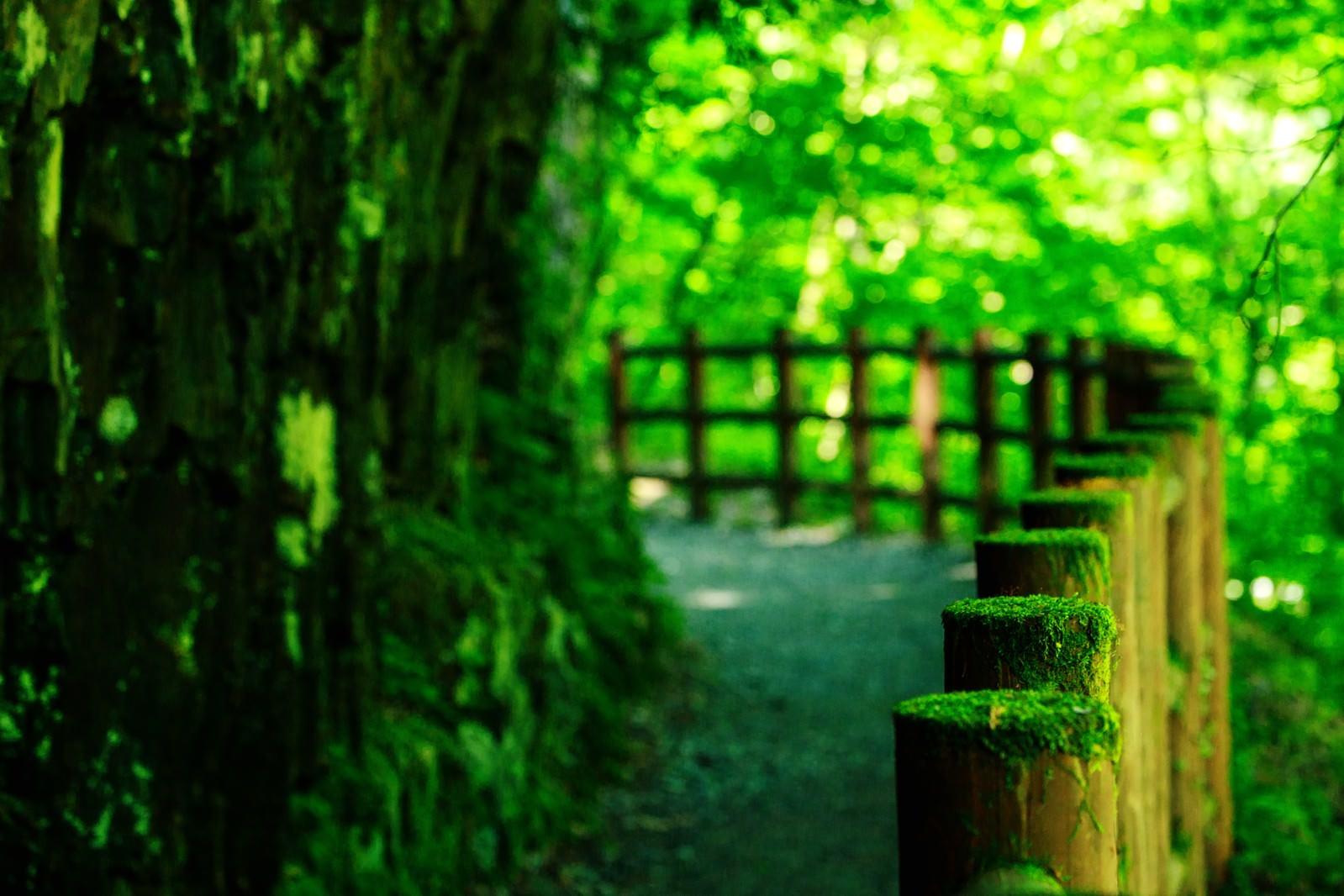 「苔の森ロード」の写真