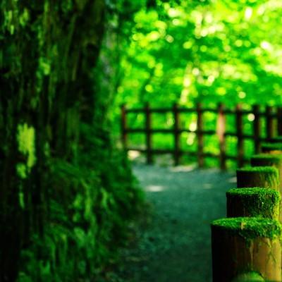 「苔の森ロード」の写真素材
