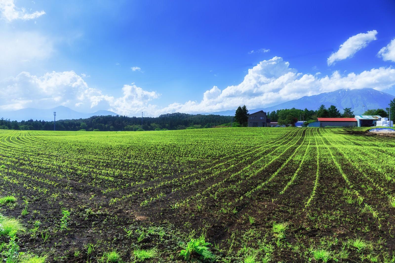 「高原の苗畑」の写真